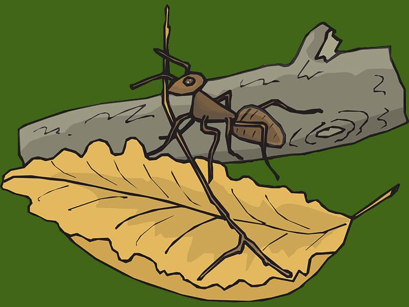 favola la cicala e la formica